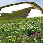 北東北山岳ガイド協会 焼石岳